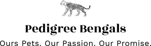 Pedigree Bengals Logo